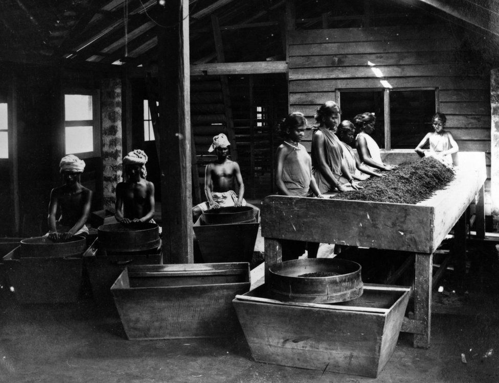 Workers drying tea leaves at a factory in India in the 1880s