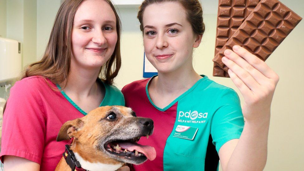 Bailey the dog ate chocolate and need emergency treatment