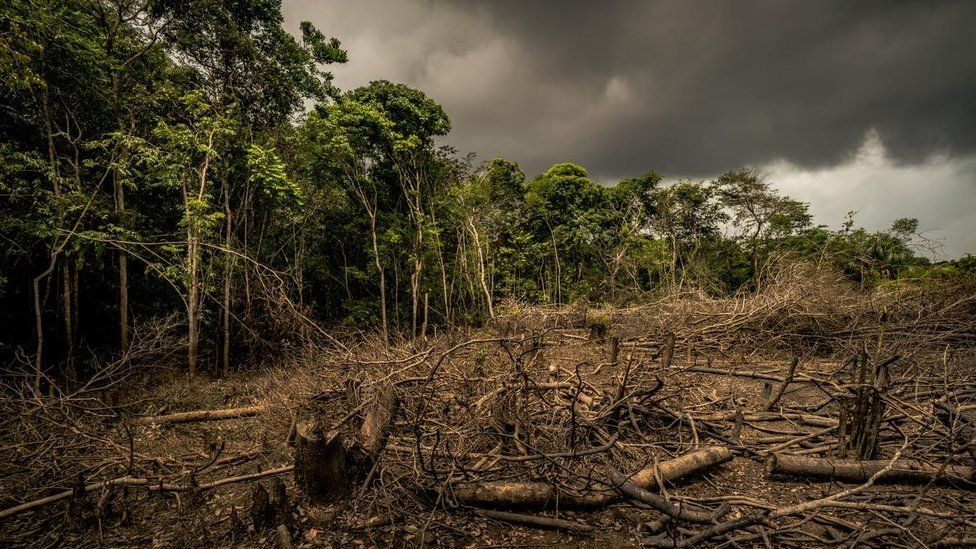 Datgoedwigo'r Amazon, Colombia