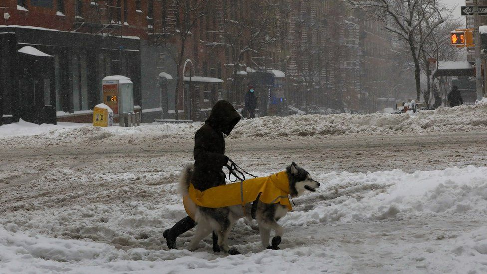 A person walking their dog in the snow in New York City