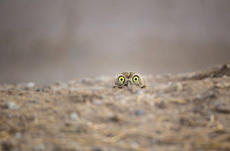 写真で見る】「コメディー野生動物写真賞」2018年の受賞作品
