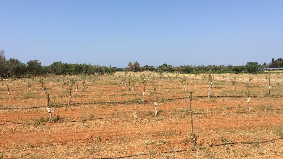 Field trials, Italy (Image: EFSA)