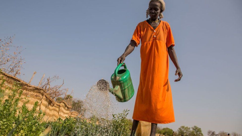 A South Sudanese farmer watering crops