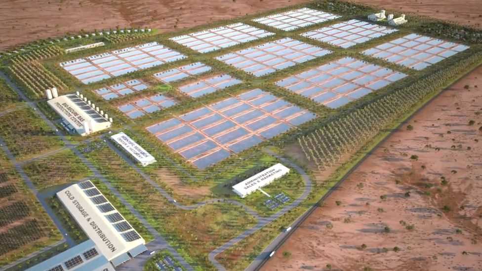 Artist's impression of Mainstream Aquaculture's planned farm in Arizona