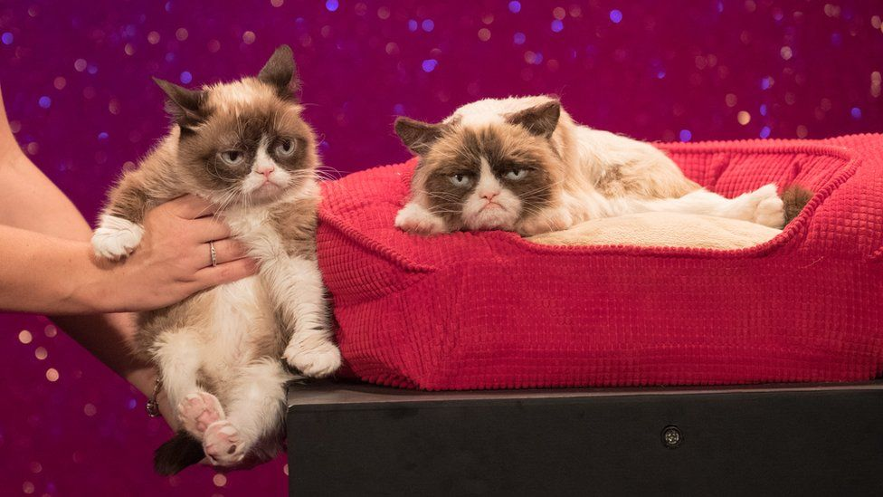 Grumpy Cat is posed next to its Madame Tussauds look alike