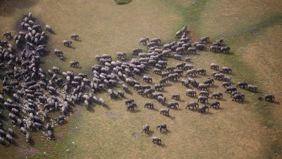 Aerial shot of a large herd of elephants in the Zakouma National Park in Chad