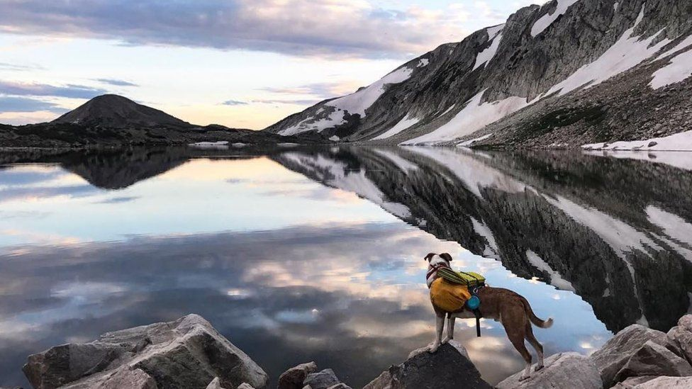 Beautiful lake and mountain landscape with dog exploring