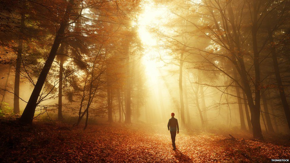 A man walking through the forest alone
