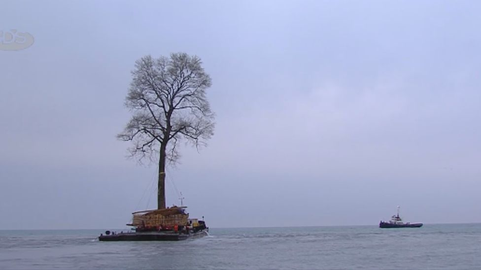 The tree on the boat