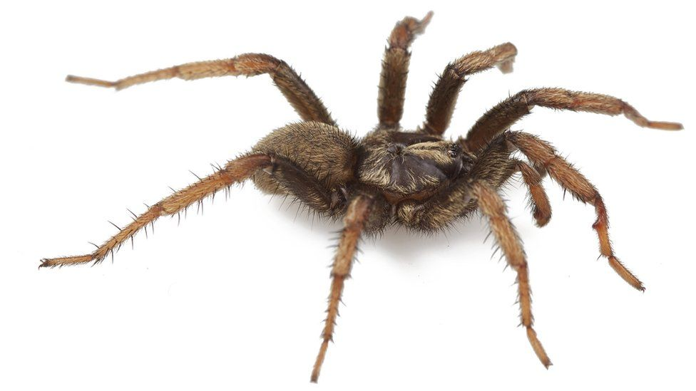 Aptostichus barackobamai is one of 33 new trapdoor spider species discovered by Jason Bond, a biological sciences professor and curator for the Auburn University Museum of Natural History.