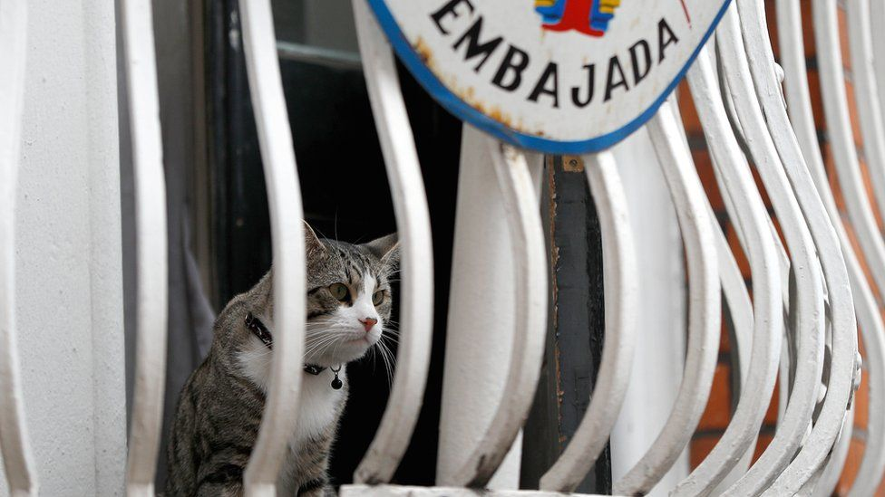 Julian Assange's cat sits on the balcony of Ecuador's embassy in London