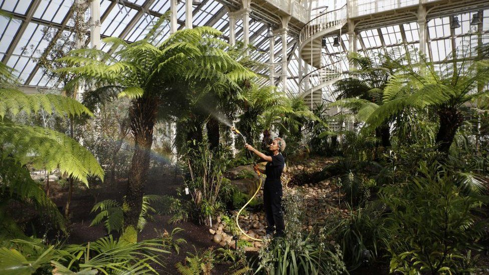 Kew Gardens: Royal Botanic Gardens breaks record for largest plant collection thumbnail