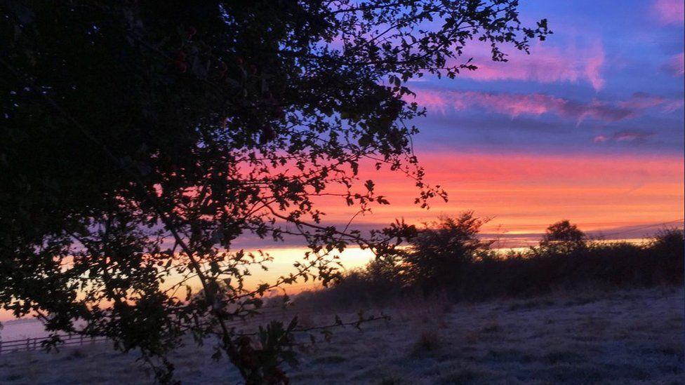 Tree with sunrise