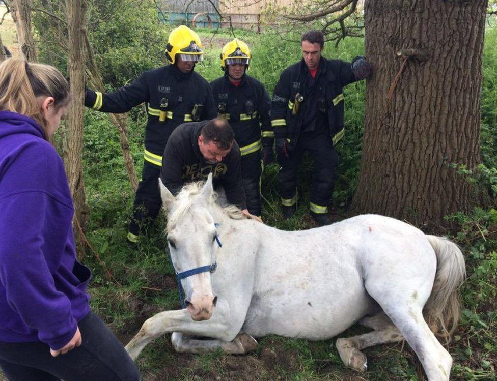 Mischief the horse who was rescued from a ditch