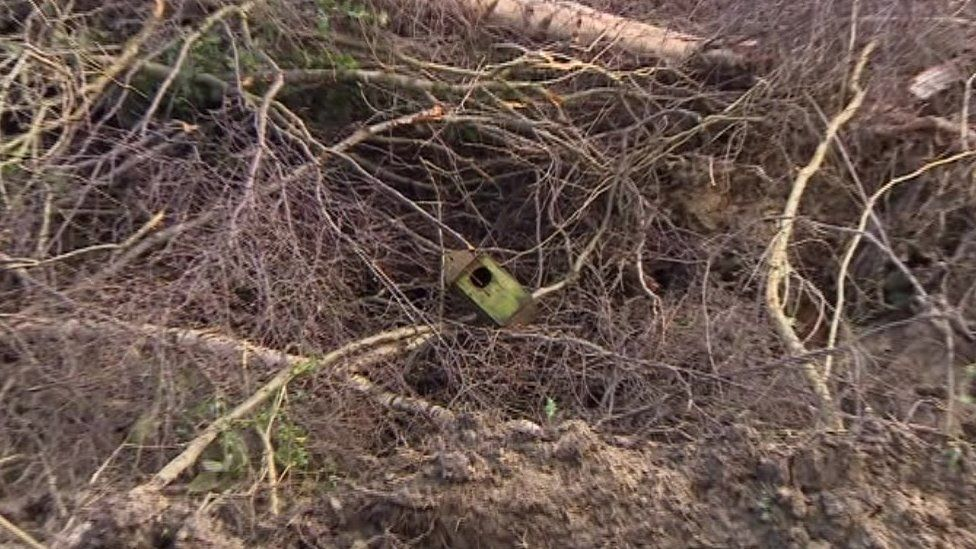A birds' nesting box lies in the wreckage of the woodland at Burleys Wood