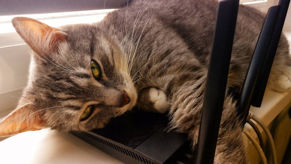 Cat on router