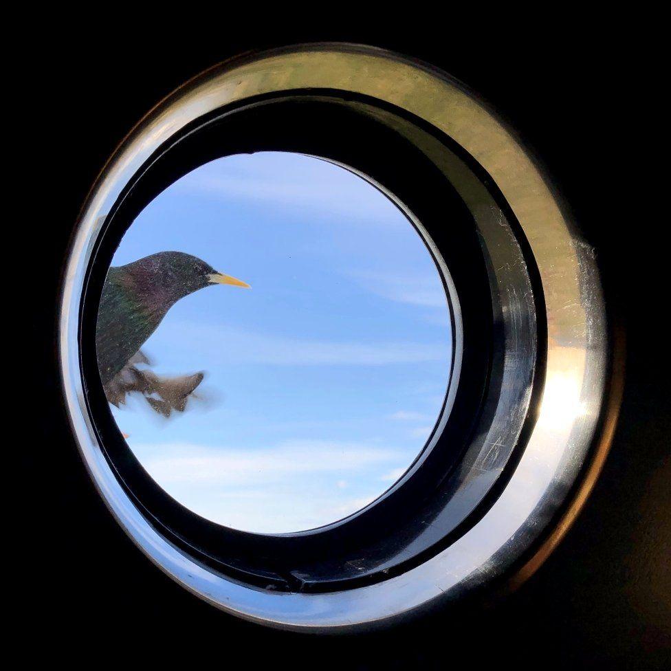 Window bird