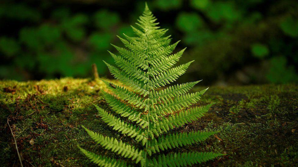 A fern leaf lies on a bough