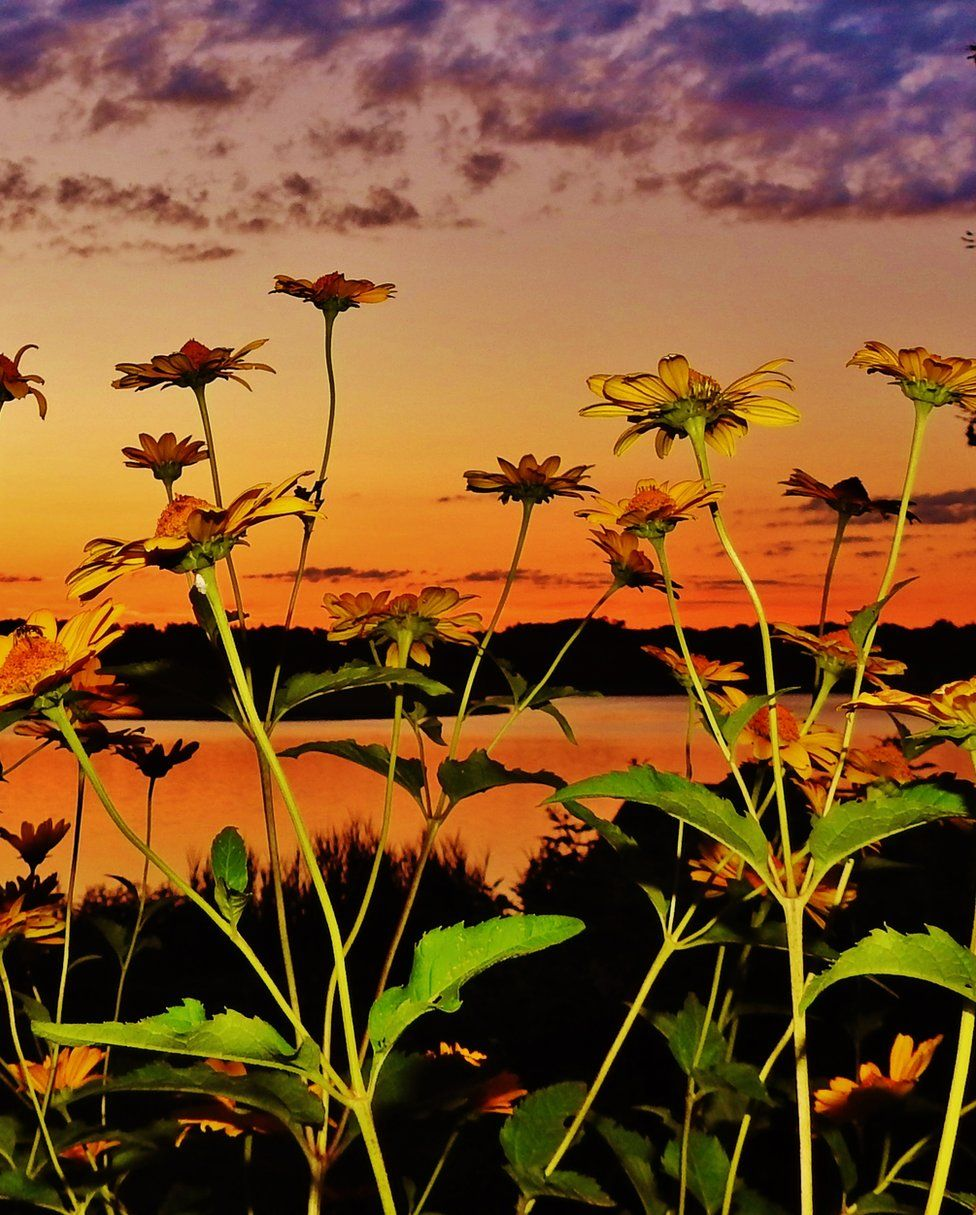Blooming yellow daises complement the warm orange sunset