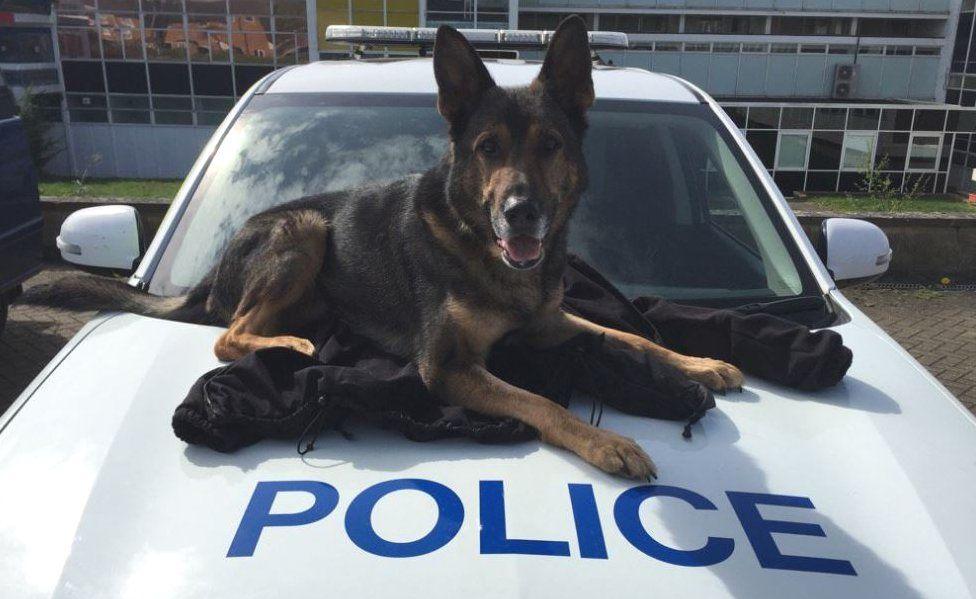 Finn on police car