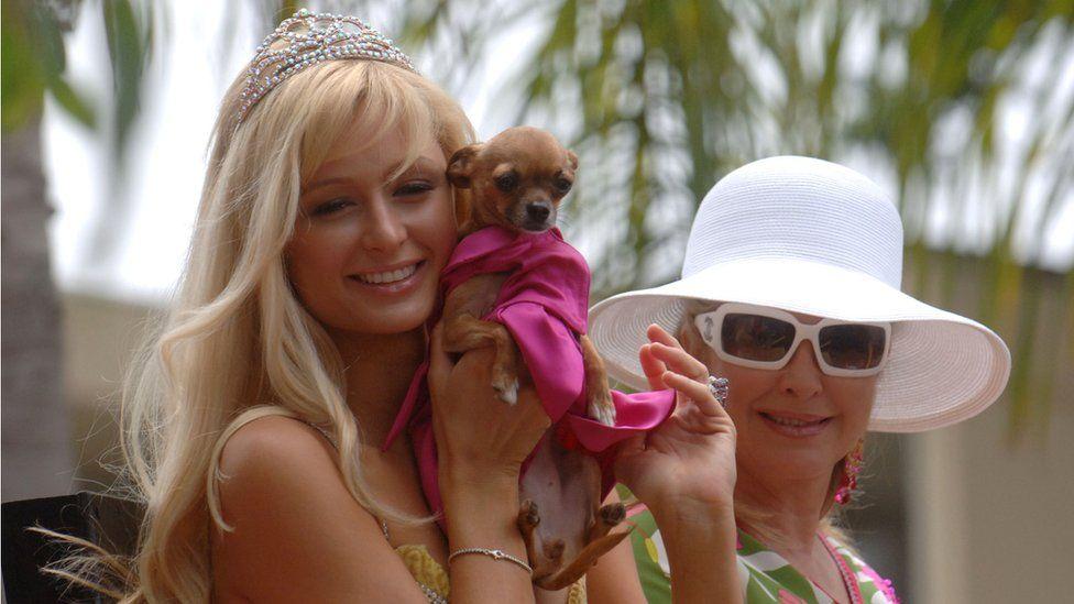 Paris Hilton with chihuahua
