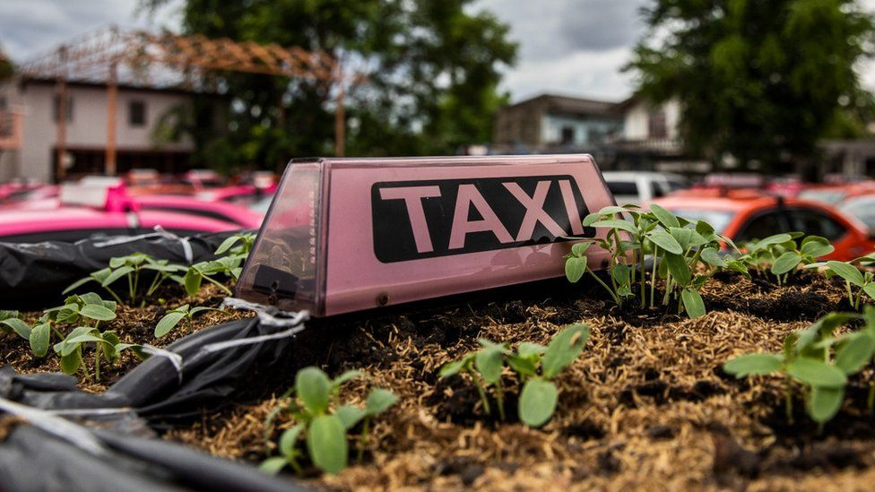 A view of the parking lot turned community garden at the Ratchaphruek Taxi Cooperative, where they're using taxi roofs as vegetable planters on September 11, 2021 in Bangkok, Thailand.