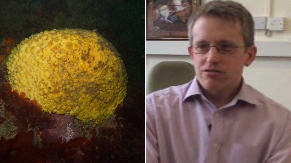 A marine sponge and Dr Alex White
