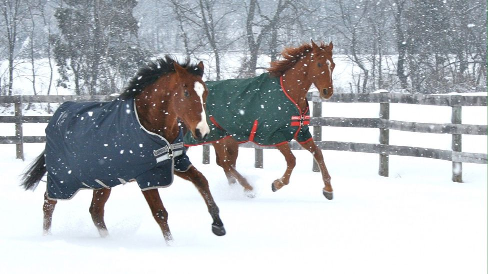 Metro (left) with his friend Pork Chop in the snow