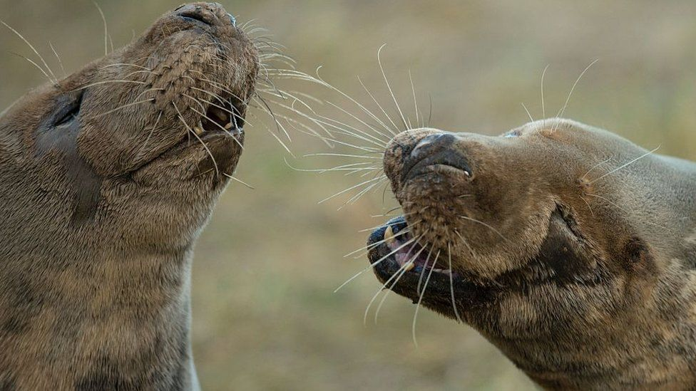 Seals in Grimsby