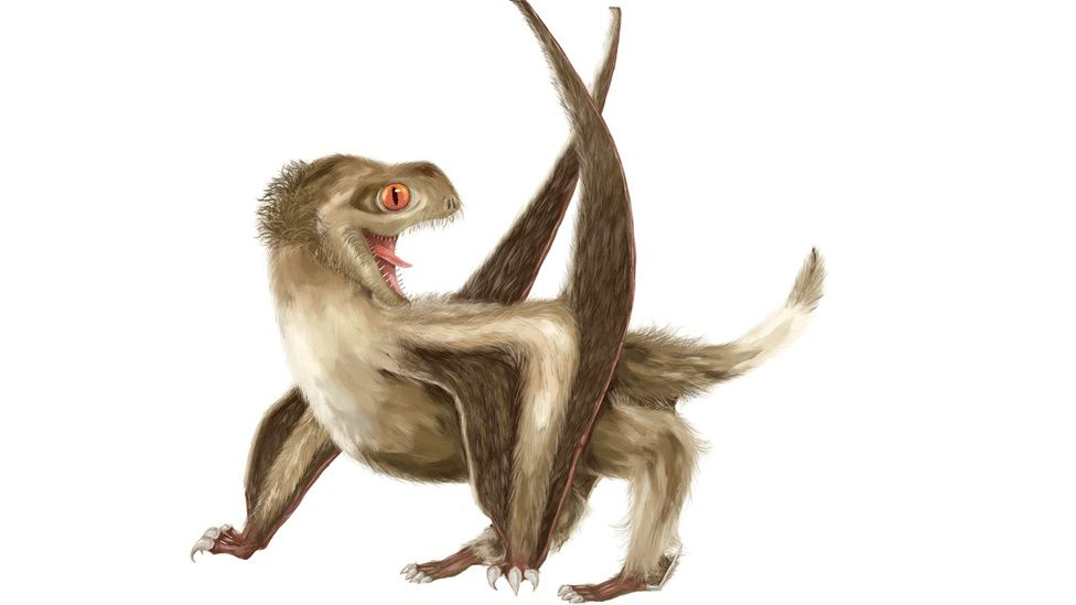 What pterosaurs might have looked like