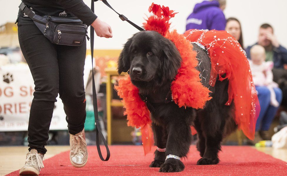 Dog wearing red feathers