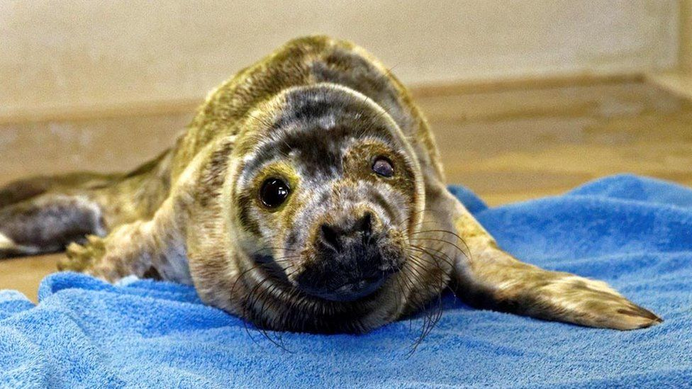 'Mad-Eye' the seal