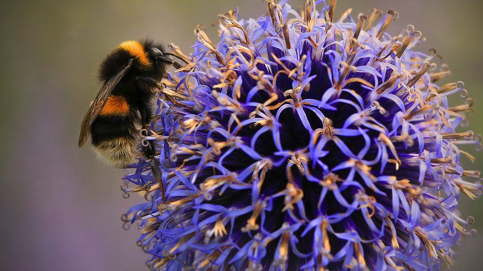 Extinction fears drive The Wildlife Trusts' re-wilding campaign thumbnail