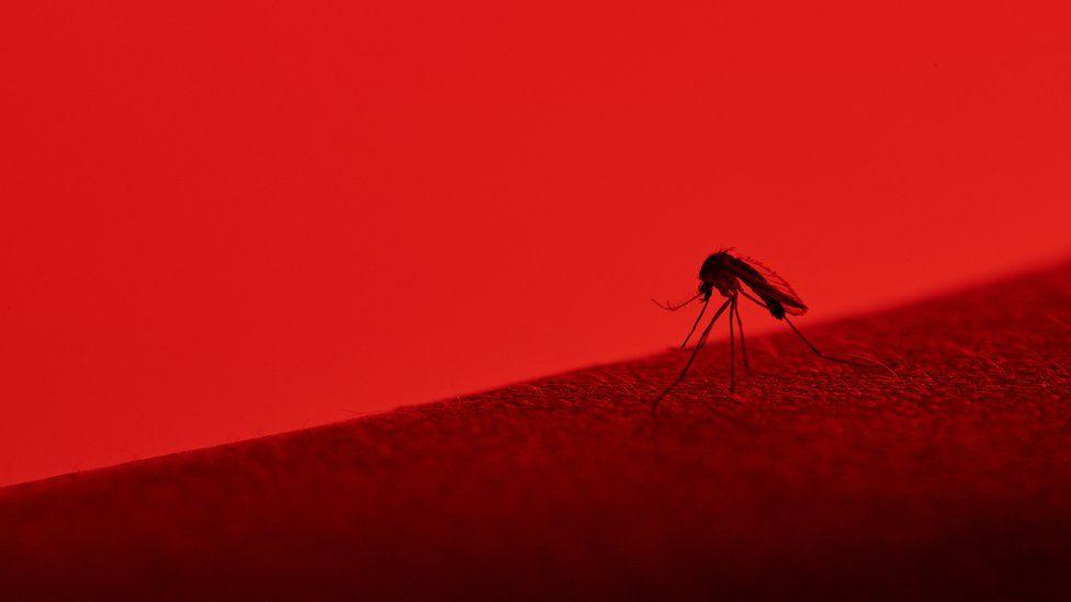 Mayaro: o que se sabe (e o que falta saber) sobre o novo vírus transmitido por mosquitos que pode estar circulando no Rio