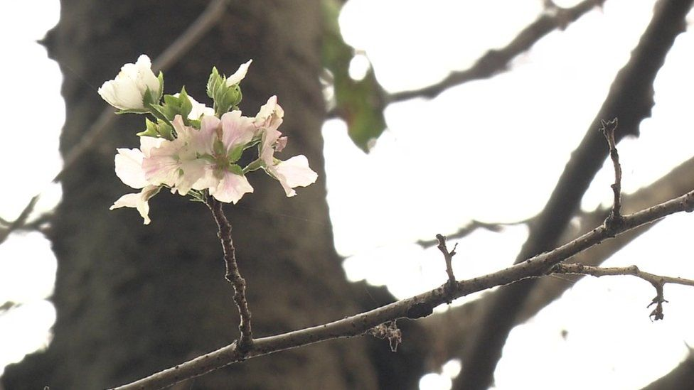 Picture shows pink and white flowers