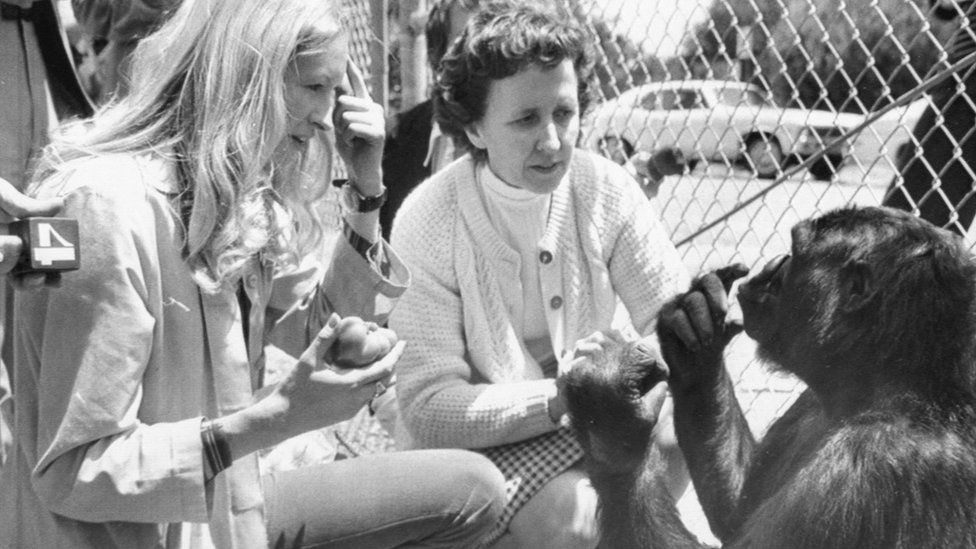 Instructors taught Koko a version of American Sign Language