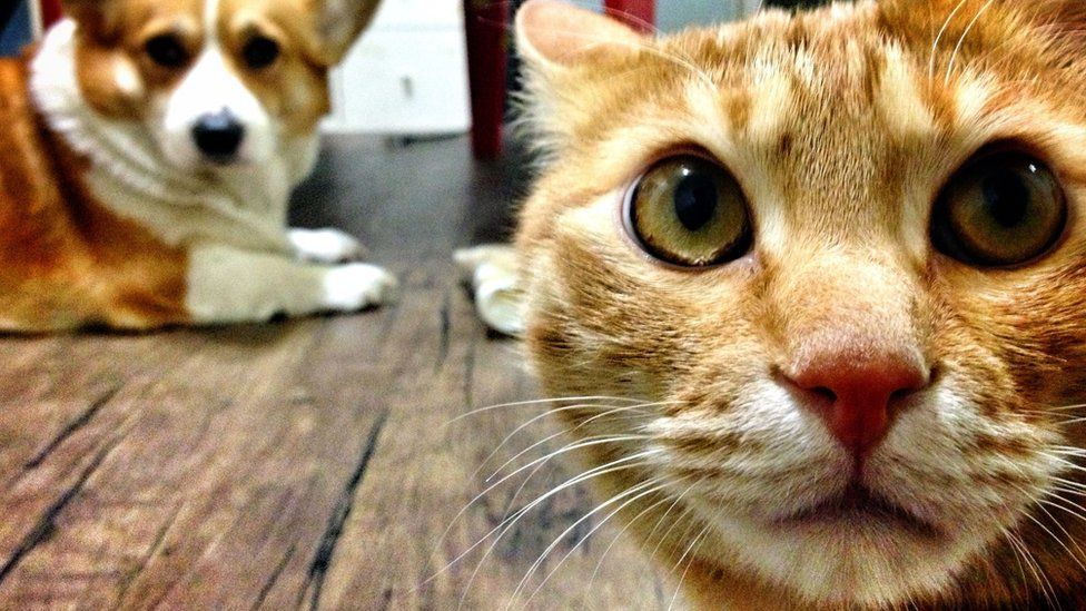 Close-Up Of Cat With Dog At Home - stock photo