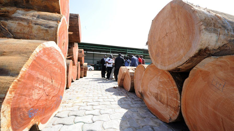 Gabon timber scandal: How 300 containers of kevazingo went missing