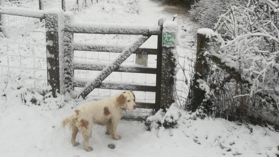 Dog in snow in Cambridge
