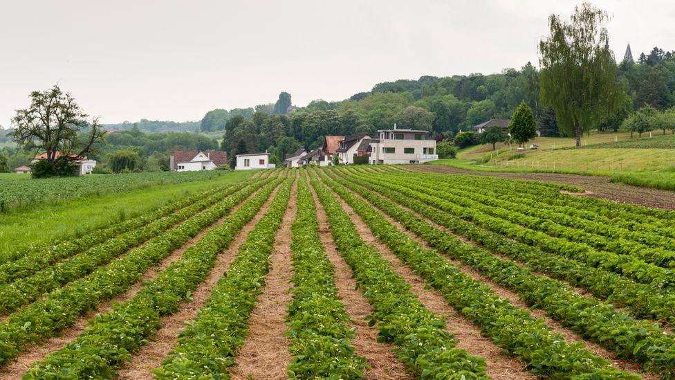 Strawberry field, Germany