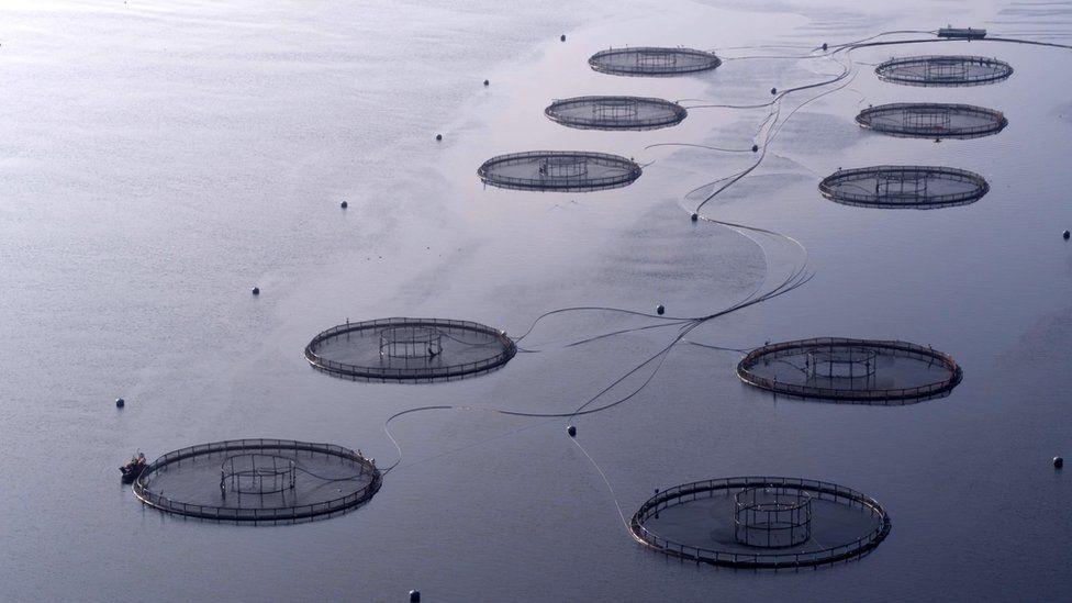 fish farm - loch fyne