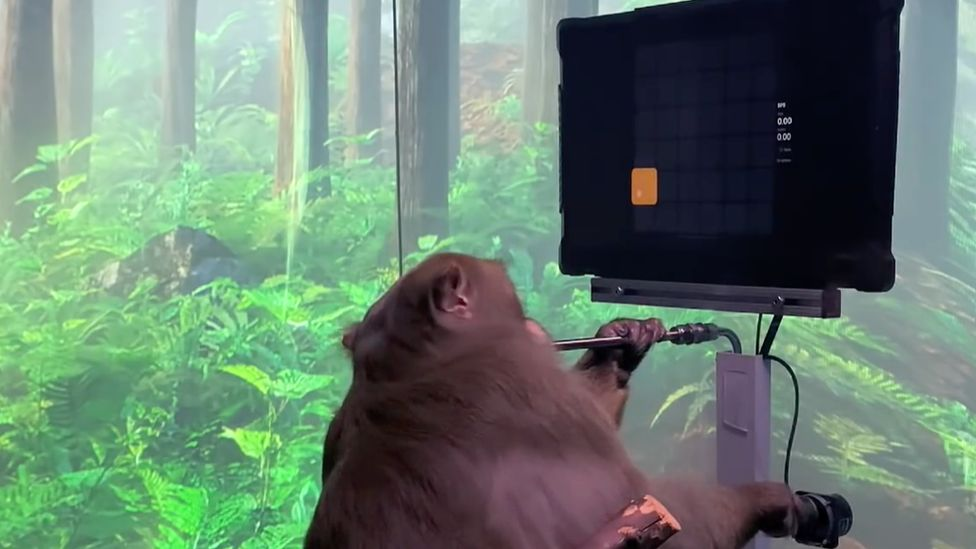 Elon Musk's Neuralink 'shows monkey playing Pong with mind' - BBC News