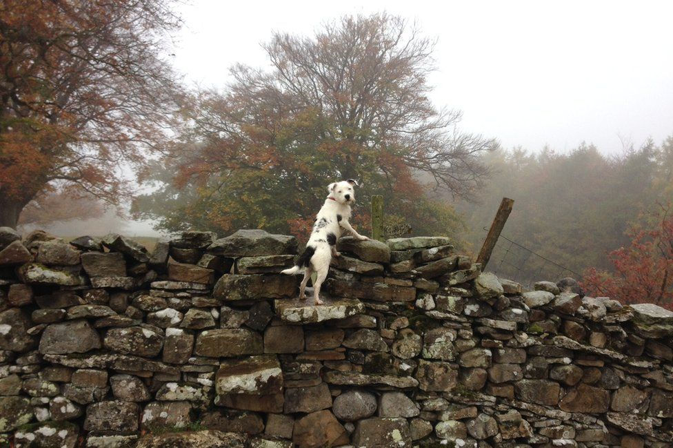 A dog on a dry stone wall