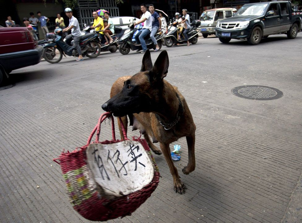 """Activists use a dog carrying a basket with a message in Chinese """"Child for sale"""""""