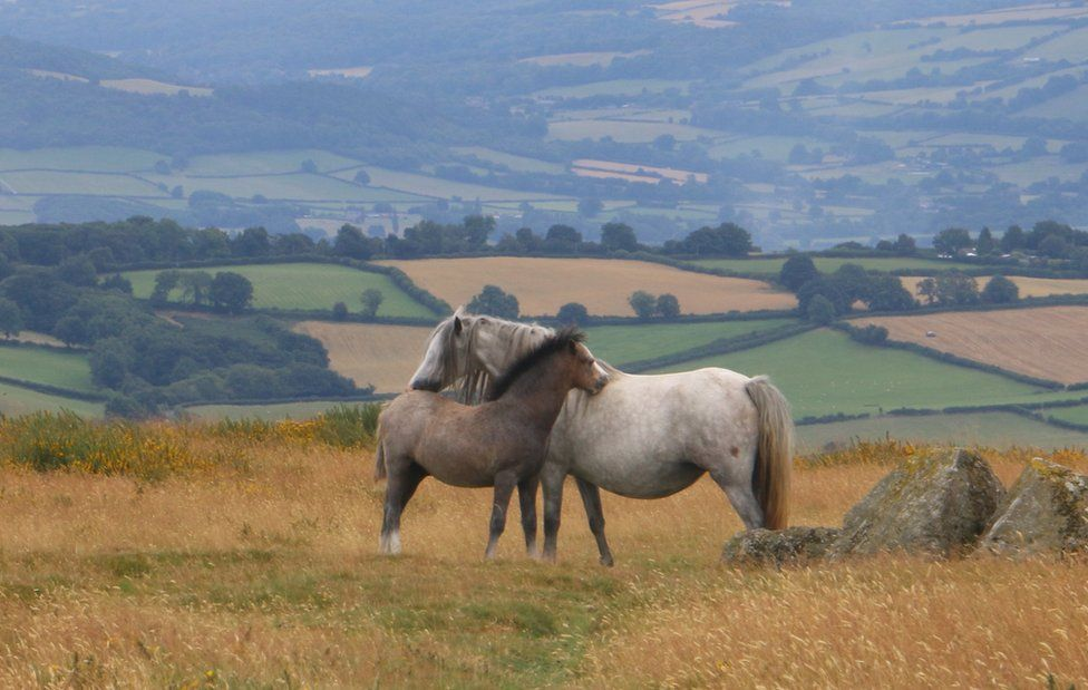 Two horses on a field