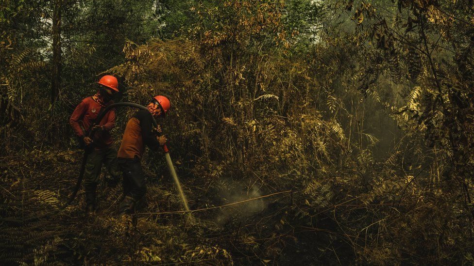 The forest fire brigade tries to extinguish a burning peatland fire in Riau Province, Indonesia