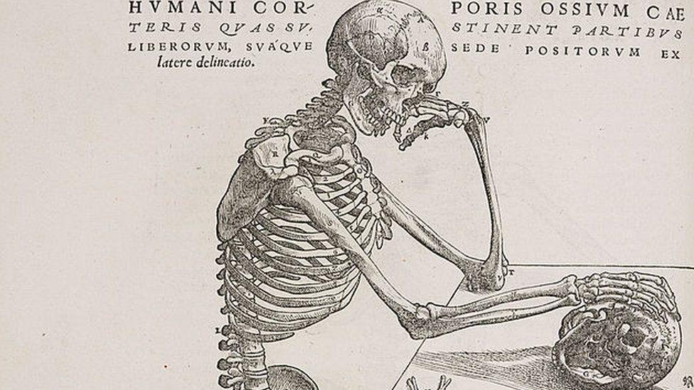5 musculos del cuerpo humano y sus funciones