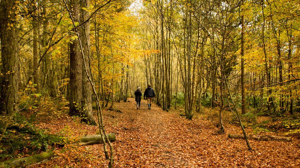 People walking in Autumn leaves