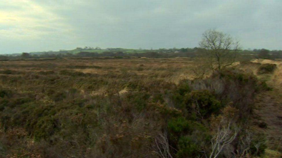 peatland,