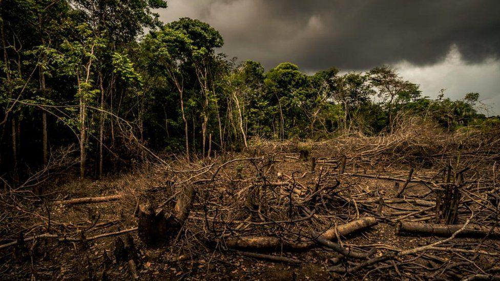 A barren forest